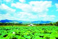 北京:湿地复苏皆绿妆 菱叶浮水见鱼翔
