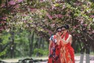 樱花盛引游人