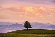 """""""一棵树""""背后的美丽西藏"""
