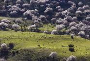 大美新疆游人如织 旅游红利普惠全民