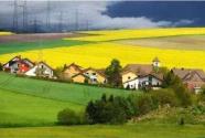乡村振兴不是一场运动, 而是一种生长