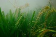 欧盟多举措保护淡水生态系统
