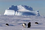 """探寻南极冰盖融化""""源代码"""""""