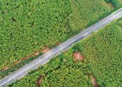 绿水青山扮靓美丽中国