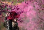 """多个旅游景区打""""花牌""""招揽游客 出境赏樱价看涨"""