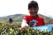 贵州玉屏:学生体验采茶乐趣