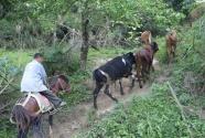 马背上的自强脱贫路
