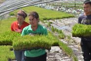 塔克拉玛干沙漠边缘种下海水稻