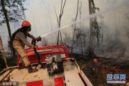 巴西亚马孙森林大火持续 消防员开展灭火工作