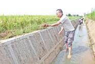 江西永丰疏通灌渠保障农田用水