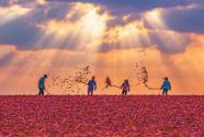 甘肃省张掖市高台县引导农民积极发展辣椒种植业