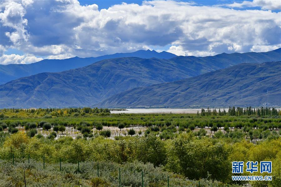 (决战决胜脱贫攻坚·图文互动)(6)荒漠变绿洲 穷乡变富地——雅鲁藏布江山南段40年造林治沙报告