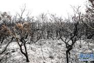 澳新南威尔士州因林火进入紧急状态