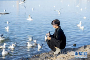 宁夏银川:鸥影翩翩
