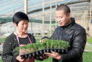 排列5河北 南和县郝桥镇:党建引领 助农增收