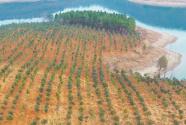 湖北当阳:推进复绿 强化整改