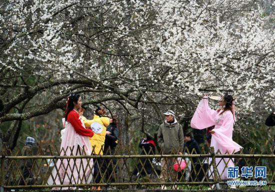 (环境)(2)贵州荔波:赏梅好时节