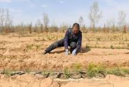 陜西榆林:春日沙漠植樹忙