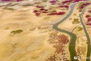 黄河口生态湿地美如画