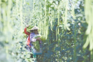 广西柳州:小小螺蛳粉成就扶贫产业链