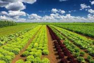 科學認識和推進農業綠色發展
