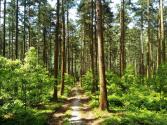 種下一片綠意,讓生活更低碳