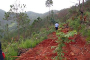 專項行動啟動!我國將全面清查毀林開墾等問題