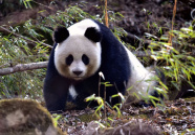 走向萬物和諧 生物多樣性保護這些年