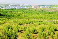 內蒙古5年治理沙化土地,約等于3個北京面積